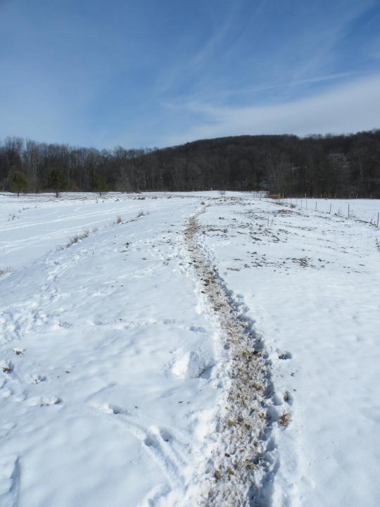 Pig Paths