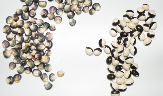 Ying Yang Beans and Blue Corn