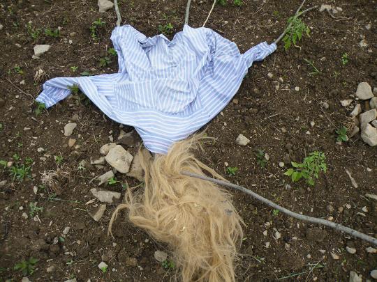 Winds knocked over Hazel