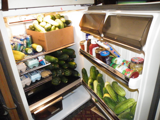 A Fridge full of Cucumbers