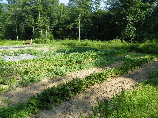 Urey and Ada's Garden