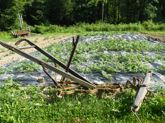 Cultivator and Watermelons