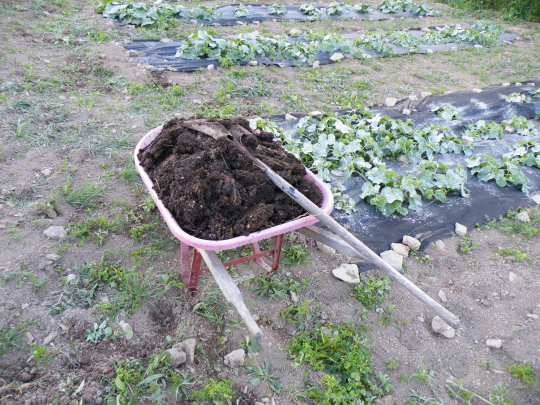 Composted Rabbit Manure