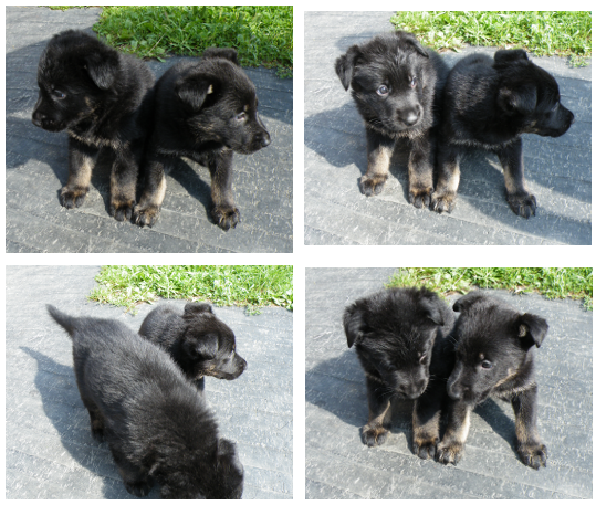 Puppy Outtakes