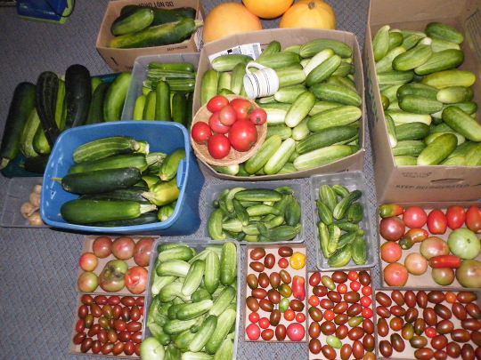 Wednesday Harvest