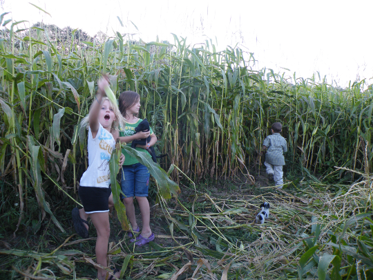 Kids Goofing Off in the Corn