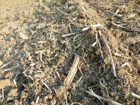 My Sun Baked Soil