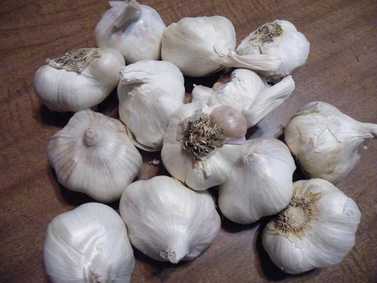 Garlic Bulbs $3.49/lb