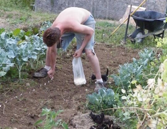Planting Garlic with Joker - Photo by Maurice Braden