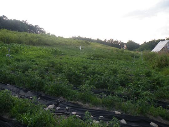 Whole Garden View