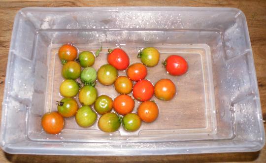 Red Alert Cherry Tomatoes