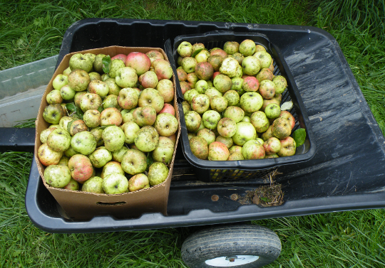 Cart Full of Apples