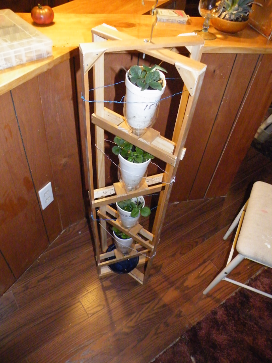 Vertical Indoor Strawberry Grow System